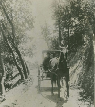 Dr. Alexander Warner driving horse drawn carriage through Warner Canyon.